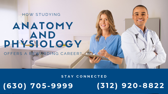 How Studying Anatomy and Physiology Offers a Rewarding Career?